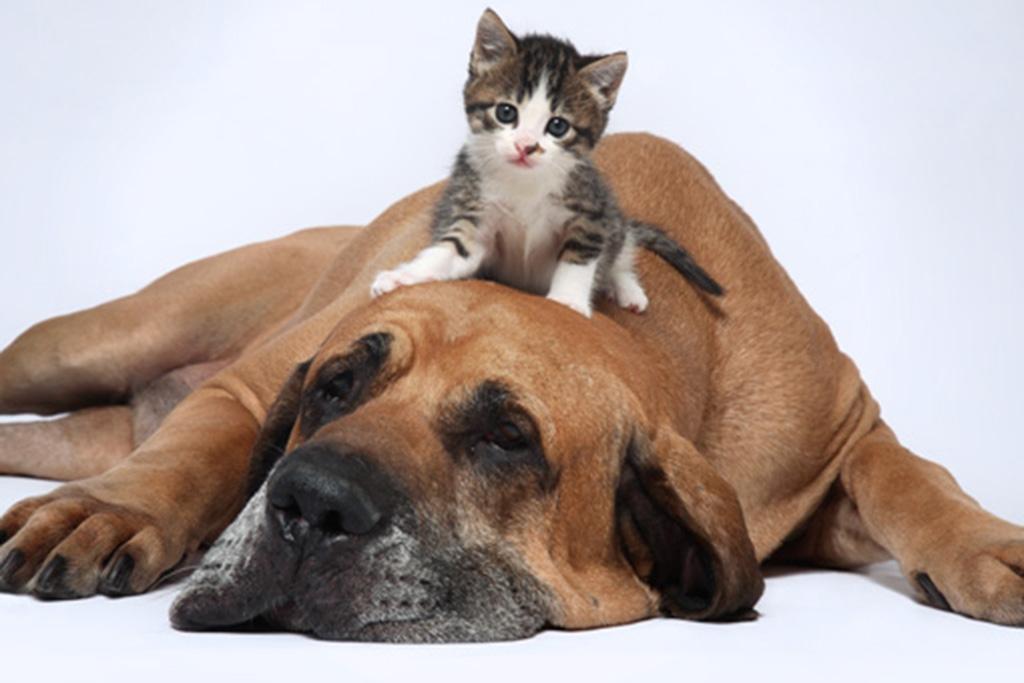 Canguro domicilio perros gatos